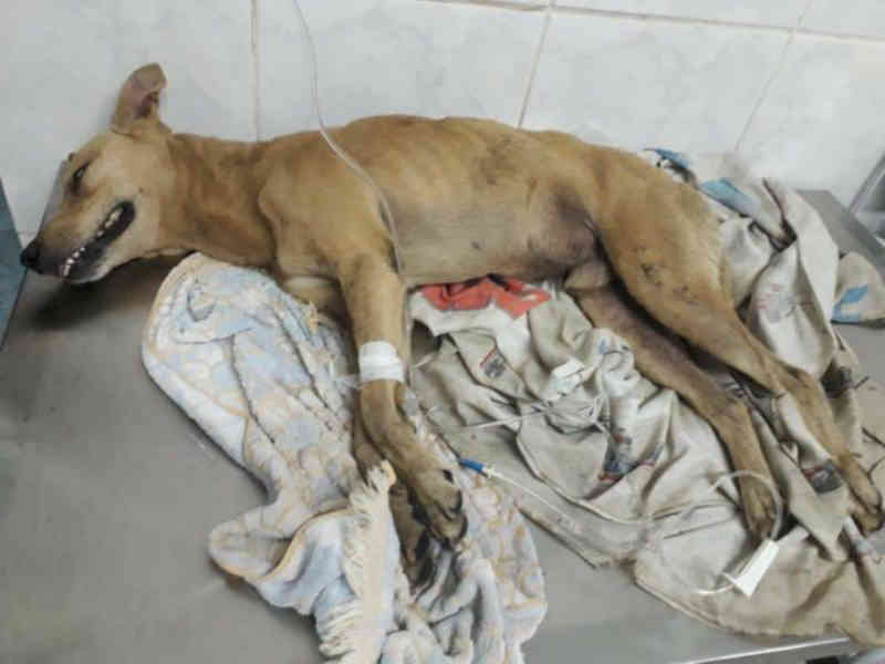 Idoso é suspeito de envenenar quatro cachorros em Santa Bárbara d'Oeste, SP