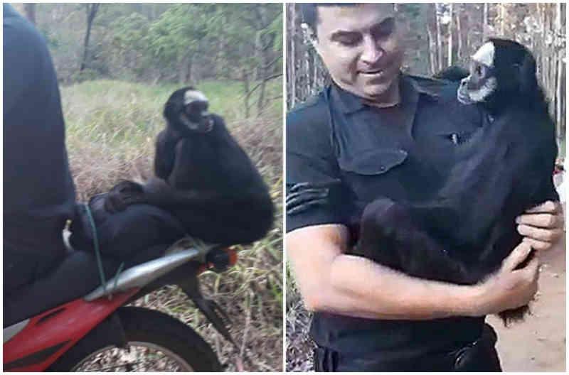 Guarda que deu 'carona' para macaca em São Carlos (SP) fala sobre repercussão de vídeo: 'Assustei'