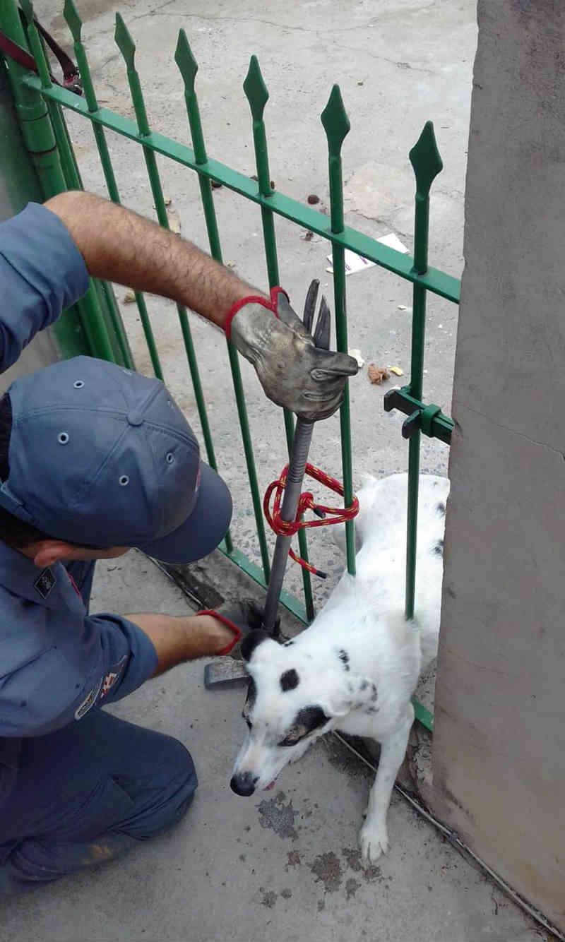 Bombeiros resgatam cachorro preso em vão de portão em Sorocaba, SP