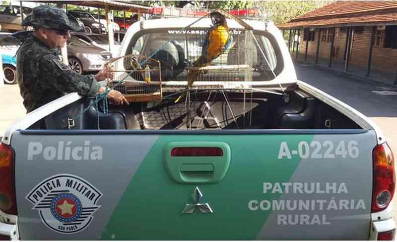 A arara-canindé resgatada em Bauru foi encaminhada para o zoológico da cidade — Foto: Polícia Ambiental/Divulgação