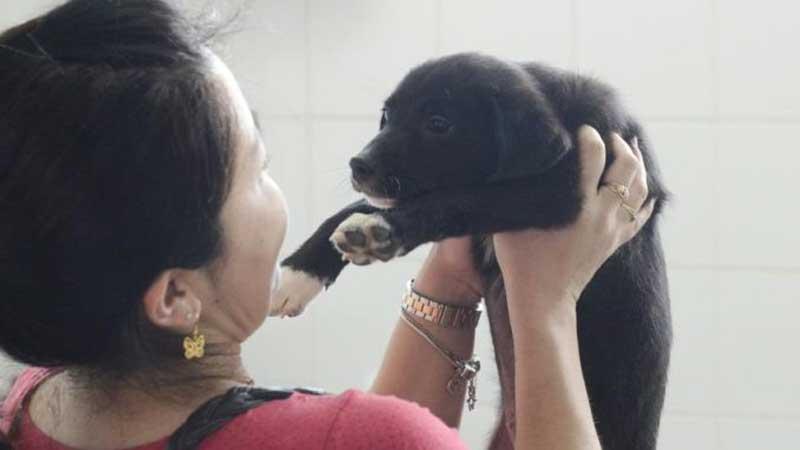 Dos 83 cães e gatos colocados em feira de São Bernardo do Campo (SP) só 4 foram adotados