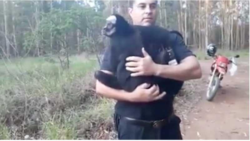 Macaca 'pega carona' em moto de guarda após fugir de parque em São Carlos, SP