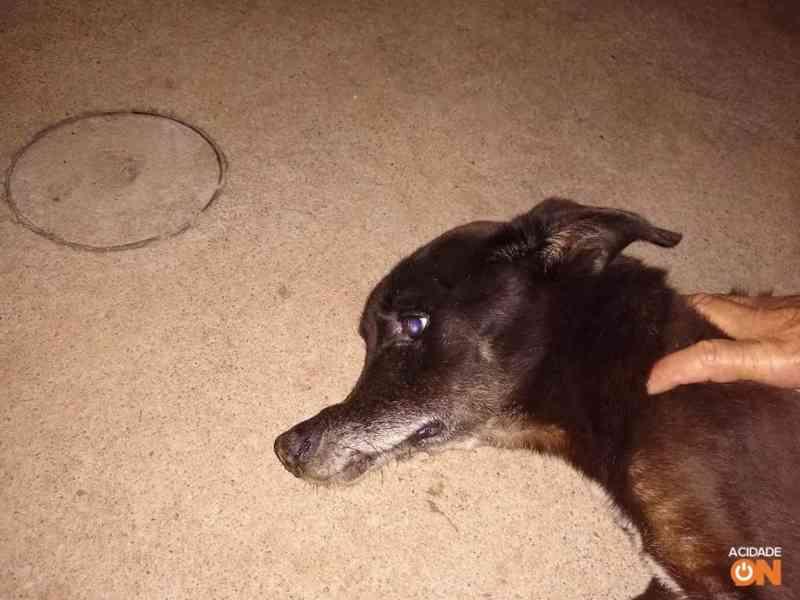 Cachorro é agredido, tem focinho quebrado e precisa de ajuda, em São Carlos, SP