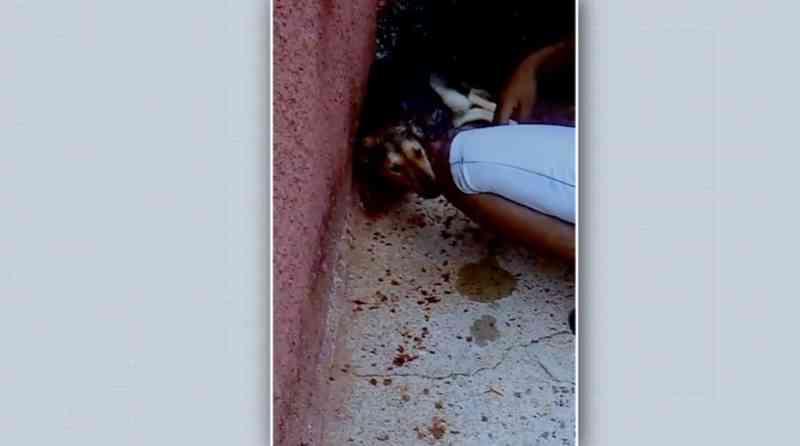 Cão teve a garganta cortada pelo tutor em Serrana, SP — Foto: Arquivo pessoal/Divulgação