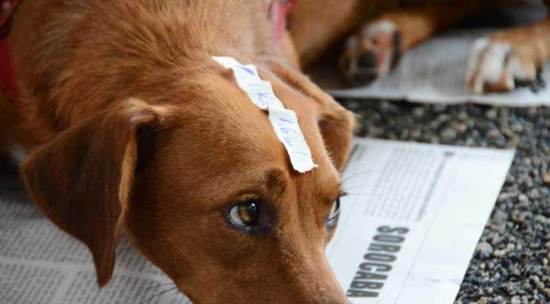 Publicada lei que endurece punição contra maus-tratos aos animais em Sorocaba, SP