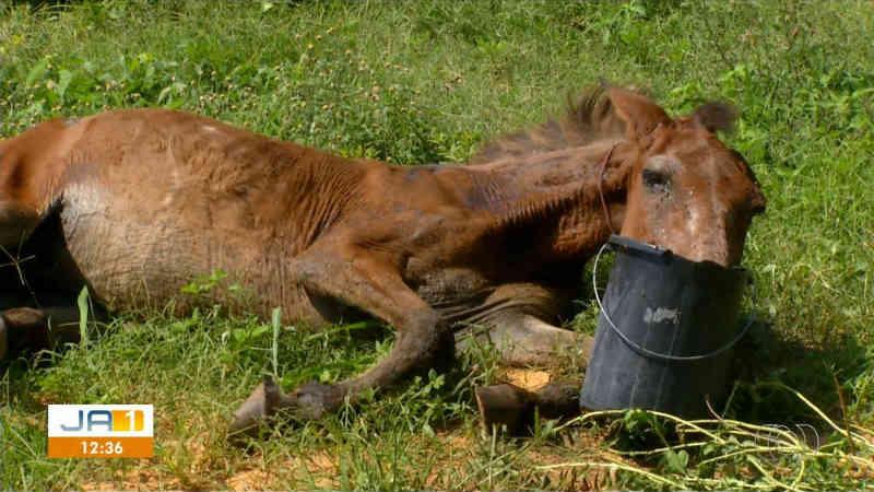 Cavalo abandonado em terreno baldio em Palmas (TO) é resgatado por voluntários e levado para chácara; vídeo
