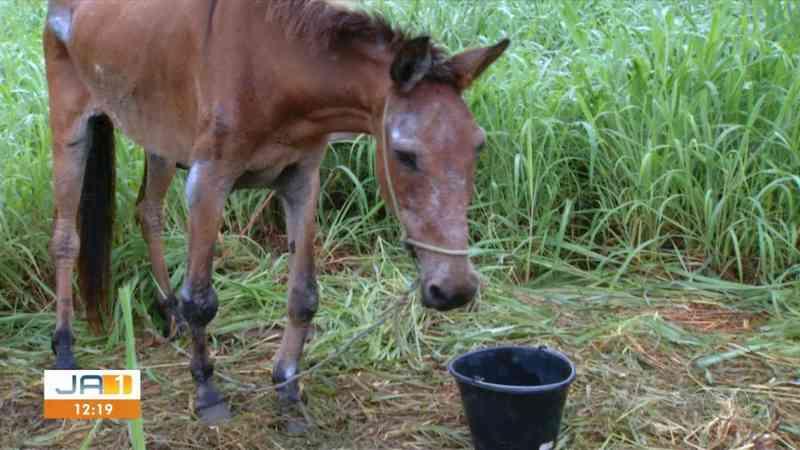 Animal está recebendo tratamento — Foto: Reprodução/ TV Anhanguera
