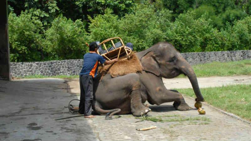 8 experiências turísticas em que maltratam animais (e que deve recusar-se a fazer)