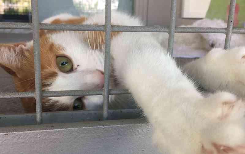 Abrigos alemães interrompem adoções de animais no Natal