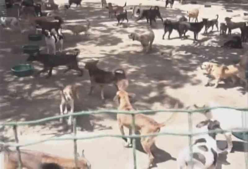 Abrigo de animais com dívida de R$ 70 mil pede ajuda para se manter, em Maceió