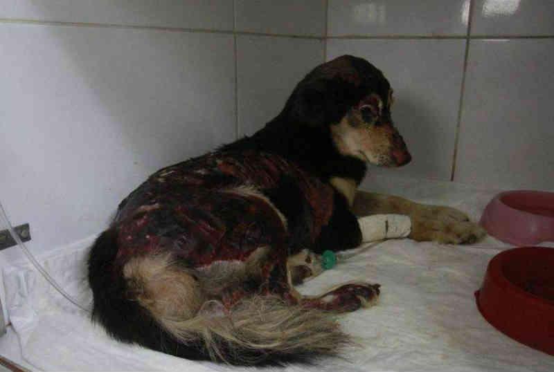 Cães e gatos resgatados em incêndio estão disponíveis para lares temporários e adoção em Manaus, AM
