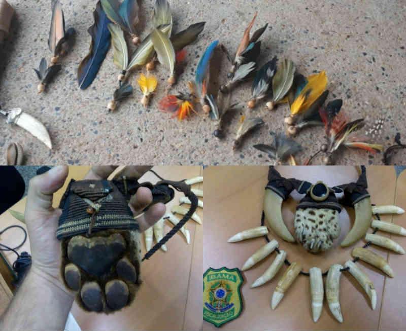 Ibama apreende mais de 80 artesanatos feitos com partes de animais silvestres, no AM