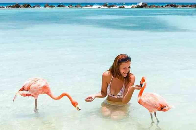 Flamingos com as asas cortadas. Em Aruba, o horror em nome do selfie