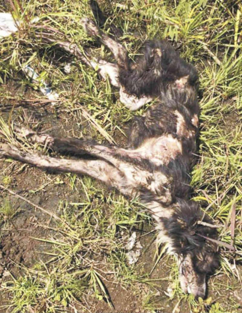 Queimaram um cão com água fervendo até mata-lo na Argentina