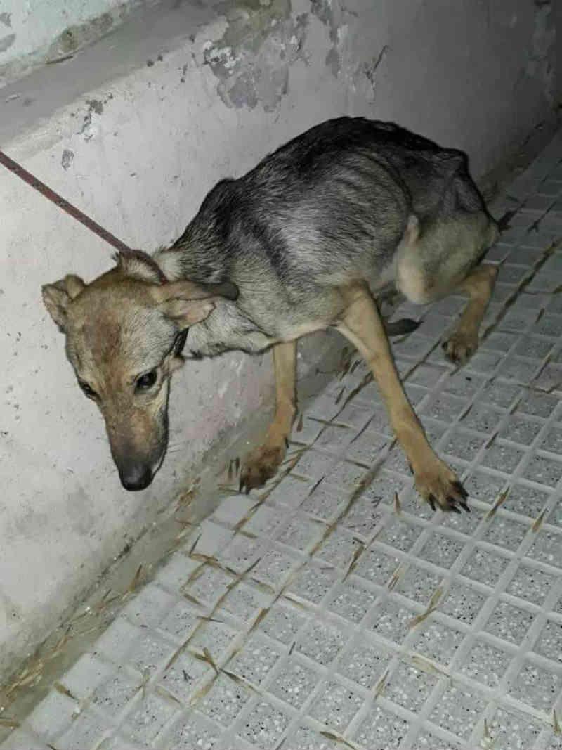 Resgate de dez cães desnutridos revelou uma trama de sujeira e negligência em Buenos Aires, Argentina