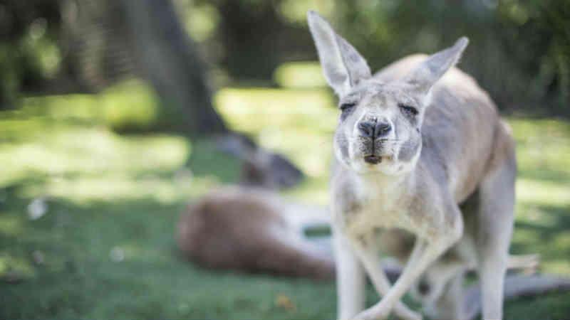 Dois anos de cadeia para australiano que torturava animais e filmava