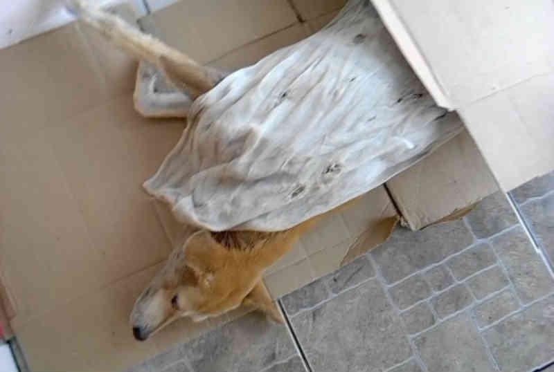 Cachorro foi espancado na feira-livre em Amargosa (BA) e grupo denuncia ação