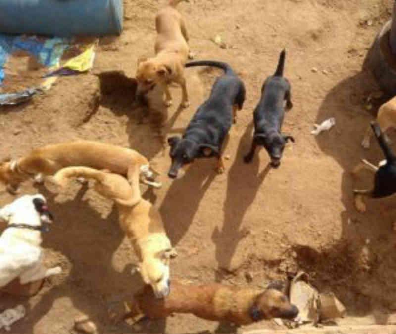 Cães são mantidos em estado precário em canil de Caetité, BA