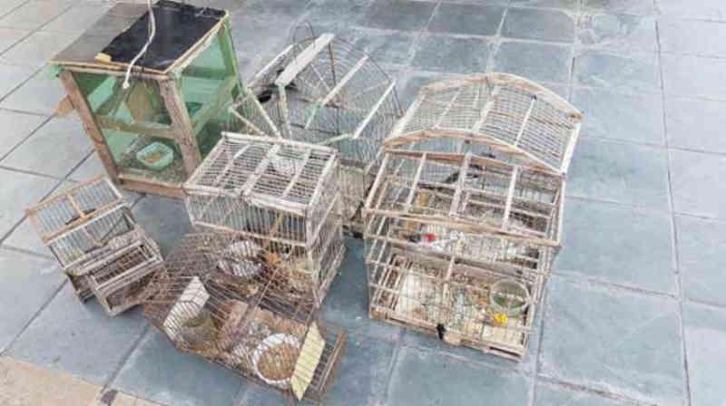 Aves silvestres são resgatadas e armadilhas apreendidas em Cipó, BA