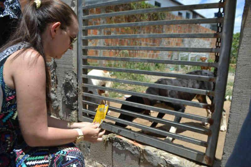 Moradores denunciam maus-tratos e abandono de cães no bairro Sobradinho, em Feira de Santana, BA
