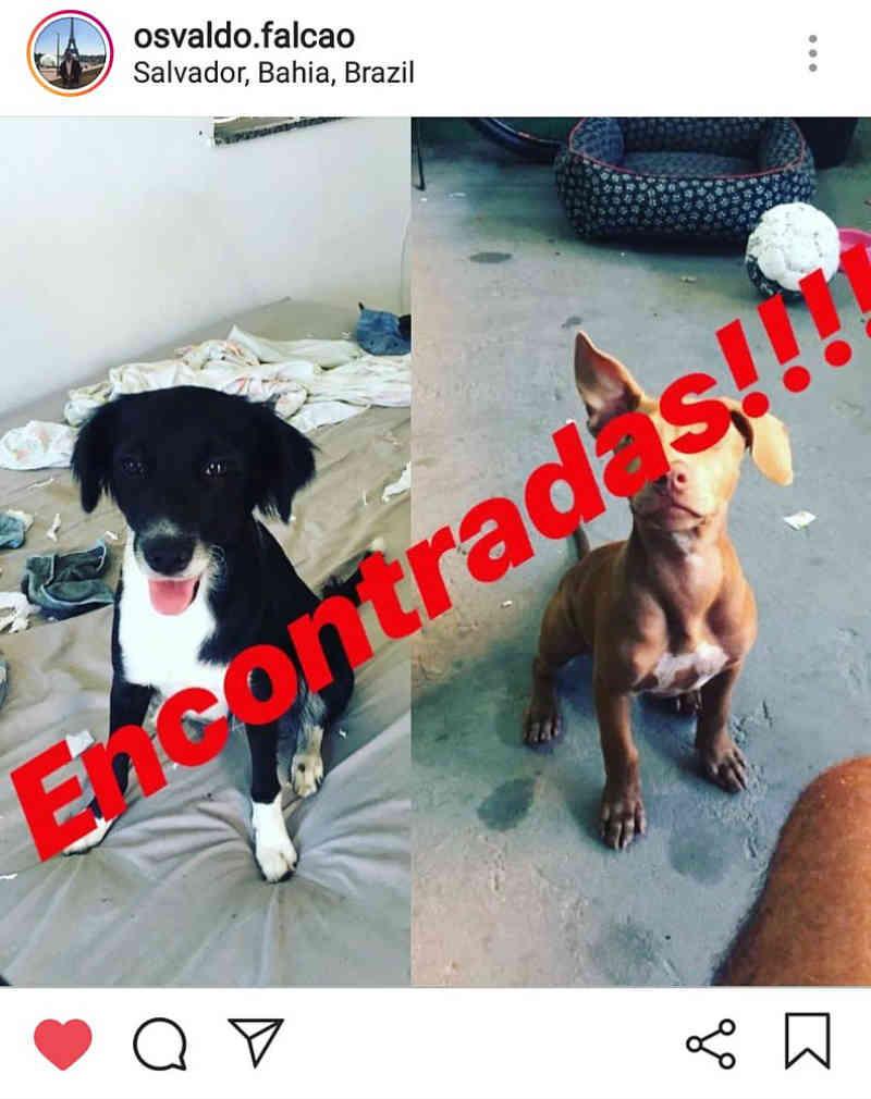 Cadelas sequestradas em Salvador (BA) são encontradas; vira-lata voltou sozinha para casa e está ferida gravemente