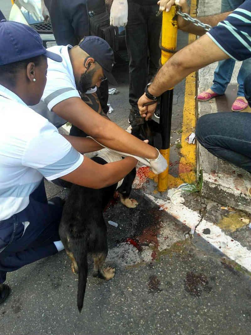Ambulante é detido após esfaquear cachorro na Estação da Lapa, Salvador, BA