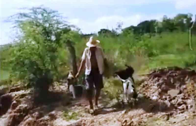 Homem é flagrado jogando cachorros recém-nascidos dentro de rio em Itiúba, BA; veja o vídeo