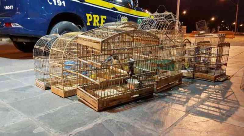 Aves silvestres são resgatadas de cativeiro em Nova Soure, BA