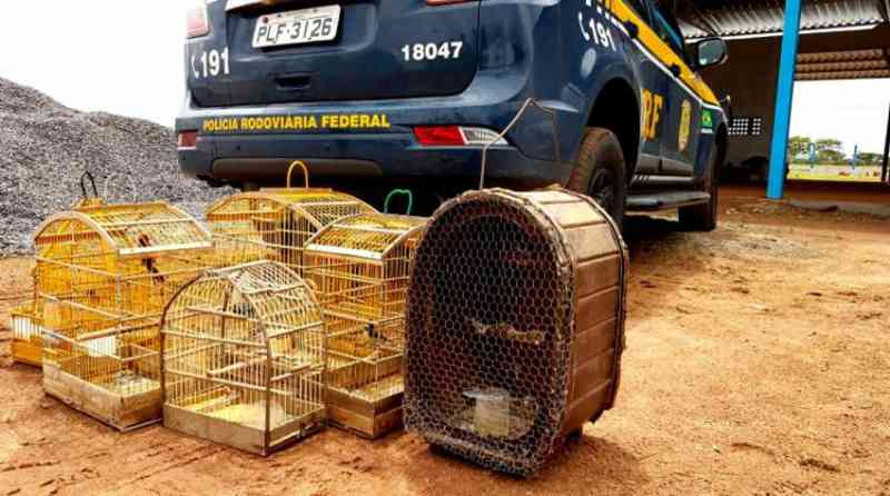 Homem é flagrado com animais silvestres em Ribeira do Pombal, BA