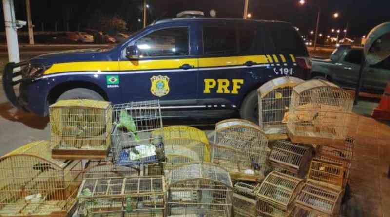 Animais silvestres mantidas em cativeiro são resgatadas em Ribeira do Pombal, BA