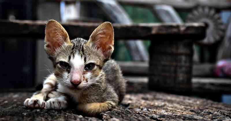 Deputado quer perda de alvará para empresa que cause maus-tratos aos animais