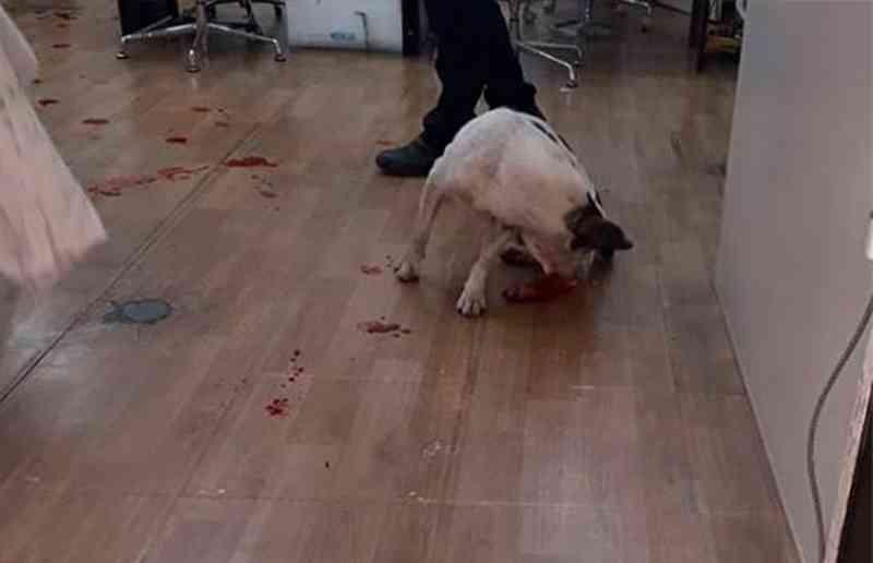 Maus-tratos contra animais é 5º crime mais cometido no Brasil