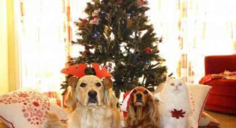 7 alimentos perigosos para cães e gatos nas festas de fim de ano