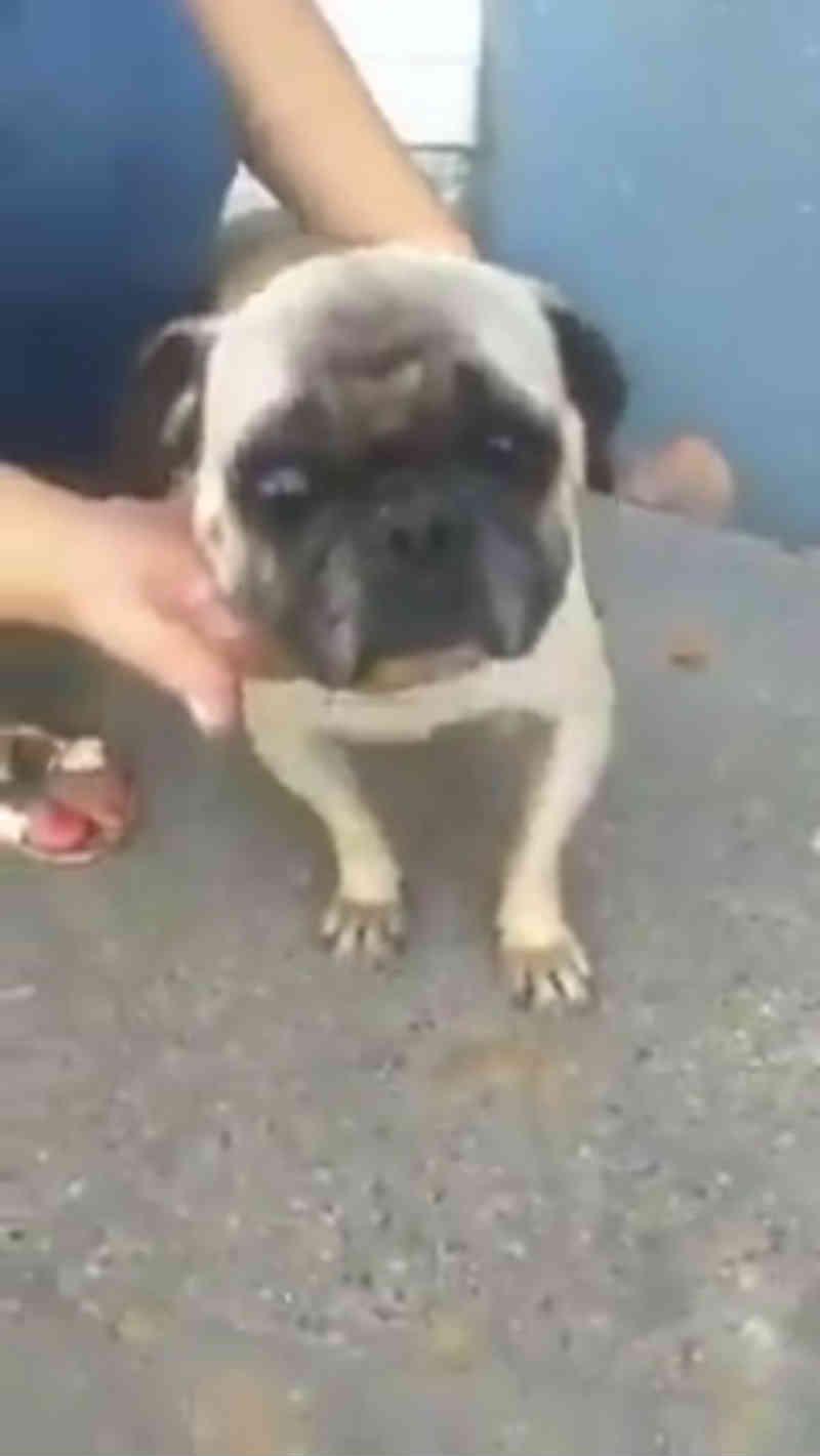 Morador de rua teria violentado uma cachorra em Bucaramanga, na Colômbia