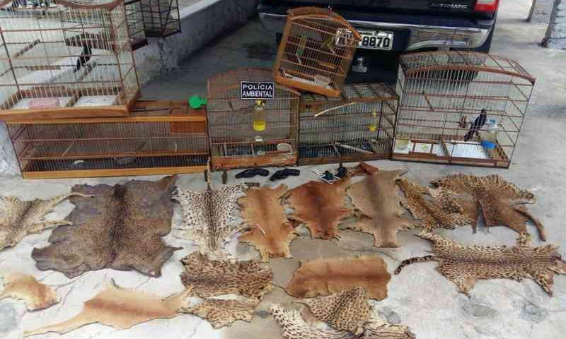 Segunda fase da operação Serra das Almas apreende 540 animais vivos e partes de animais, como peles e rabos. — Foto: Ibama/Divulgação