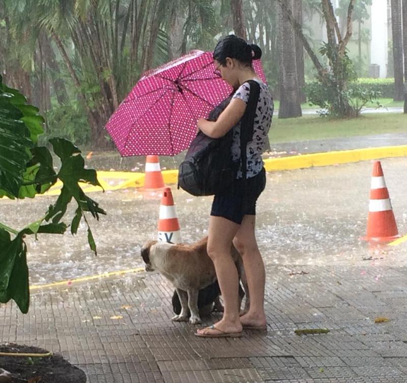 Estudante protege cachorros de rua durante chuva em Fortaleza, CE
