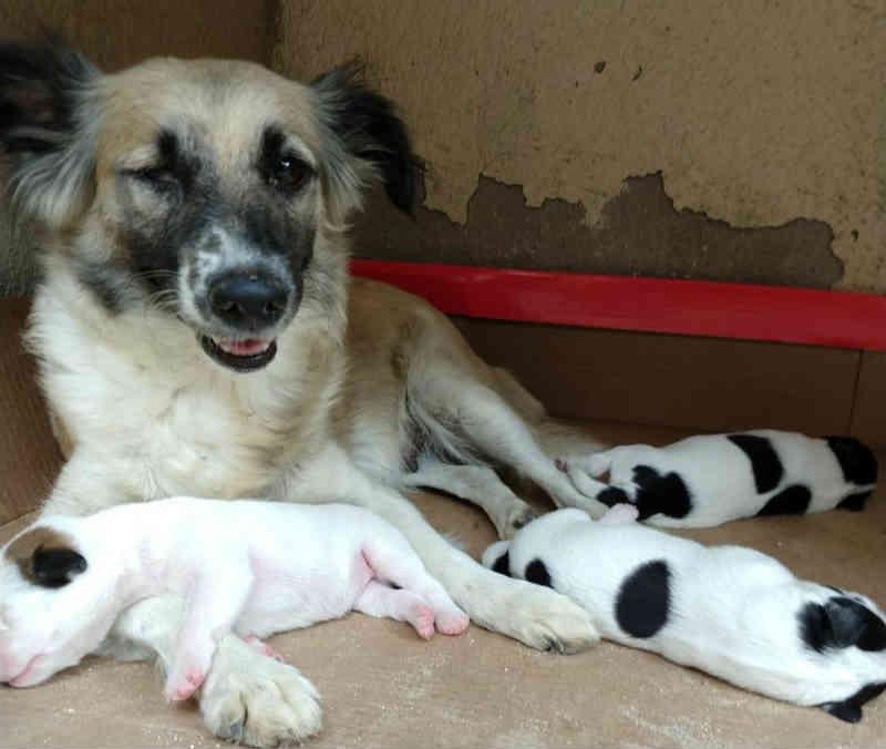 Policiais resgatam filhote de cachorro abandonado em encanamento no Ceará