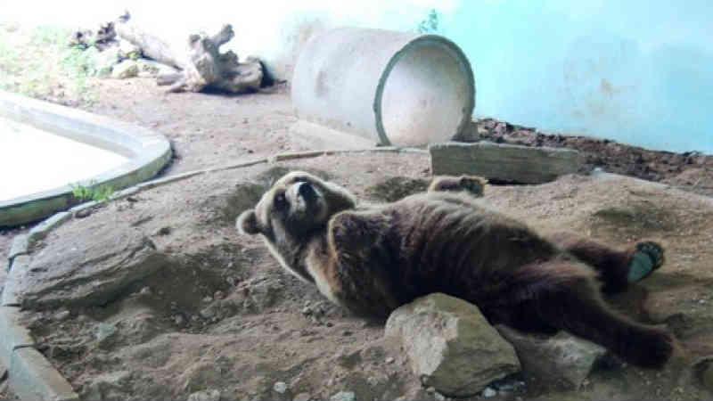 Ursos permanecem em Canindé, CE; ONG contesta