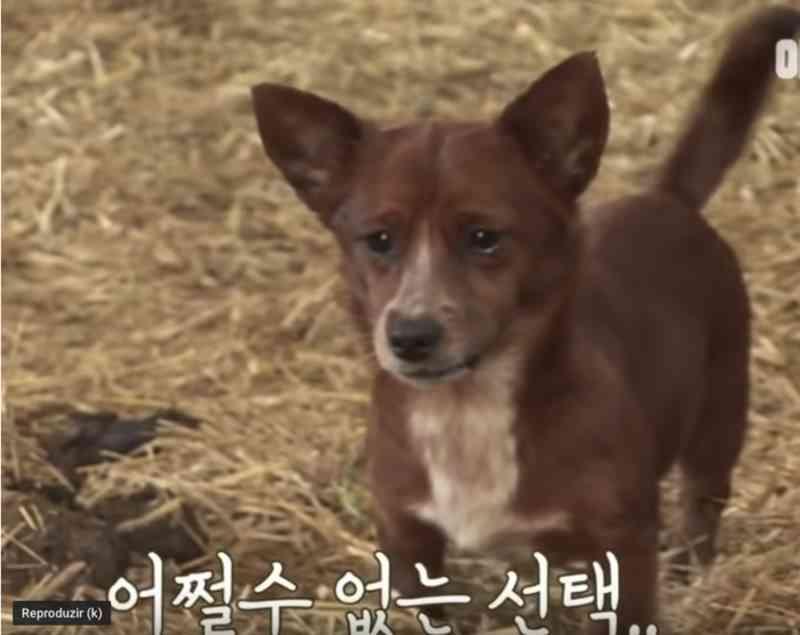 Cadela criada por vaca chora ao ver 'mãe' ser vendida; assista