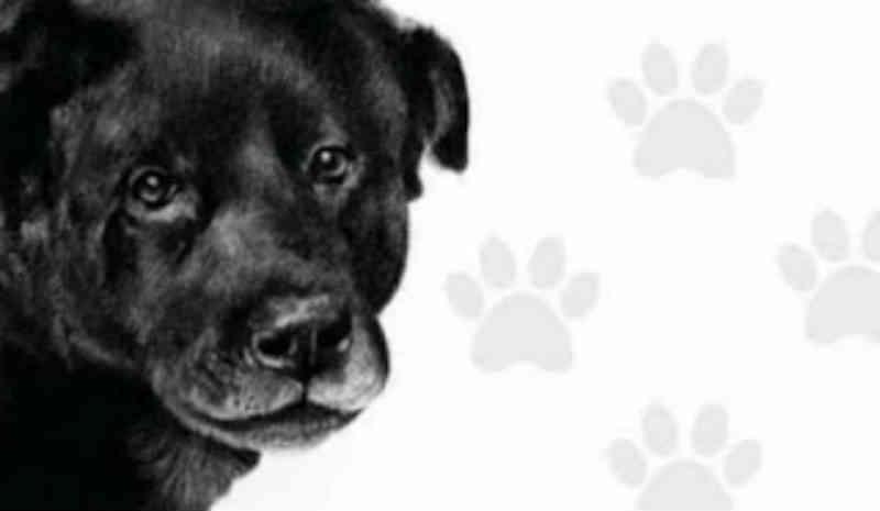 Maus-tratos a animal no Chile: cachorrinha foi esfaqueada e queimada