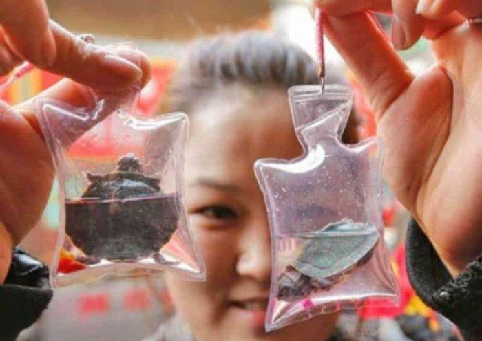 Animais vivos são vendidos como chaveiros na China