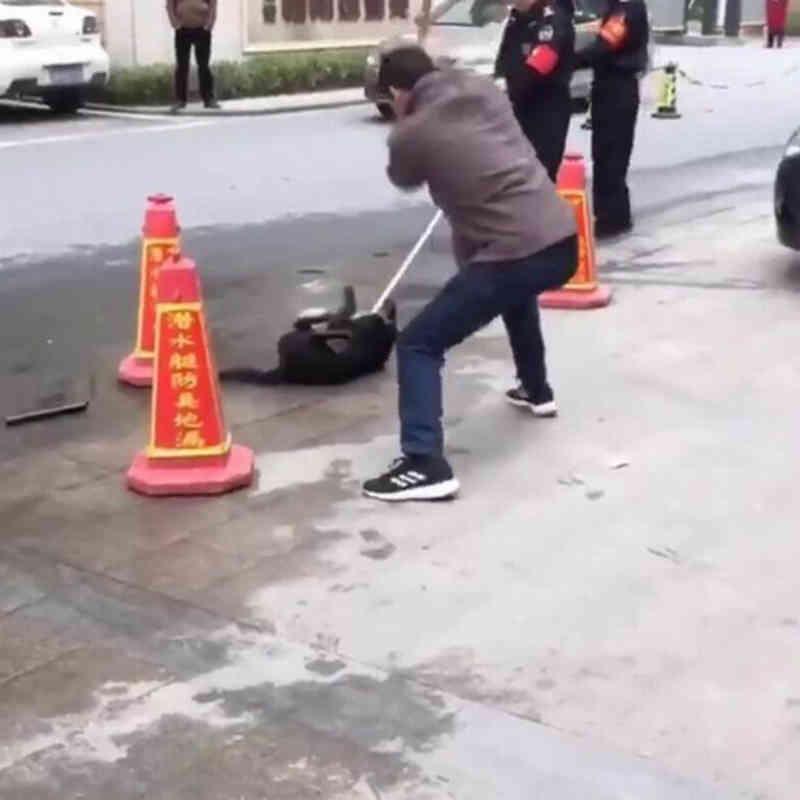 'Esquadrão de ataque' chinês agride cães encontrados na rua após as 19 horas, com frequência até a morte