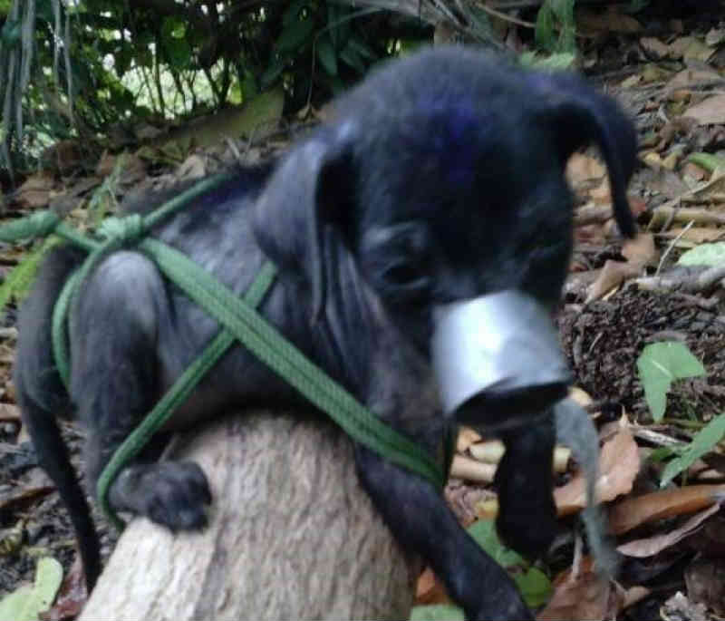 Ativistas em Cuba denunciam um agressor e assassino de cães