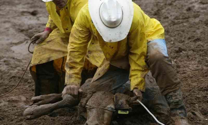Lei que aumenta pena para crime de maus-tratos PREJUDICA animais