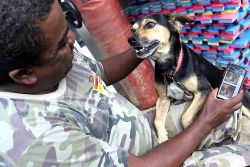 Polícia Militar Ambiental facilitou a adoção de 250 cães e gatos no DF