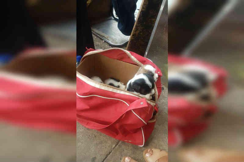 Cães desnutridos, feridos e desidratados são resgatados no DF