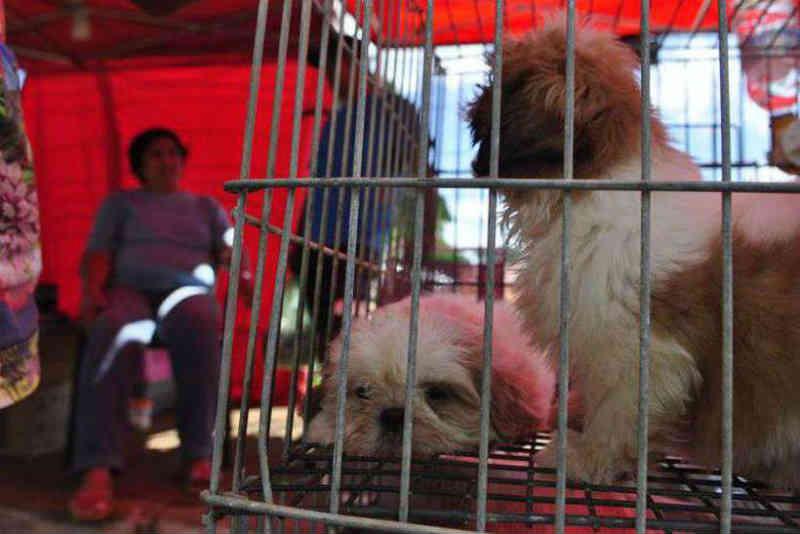 Justiça mantém proibição de venda de animais em ruas e feiras do DF