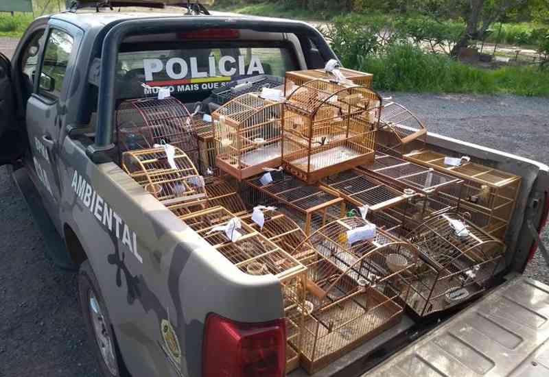 PM resgata aves silvestres que eram criadas em gaiolas no DF