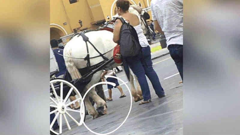 Denúncia de maus-tratos a cavalo na Praça Principal de Lima, no Peru