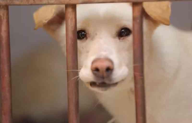 Por que os planos do Egito de 'exportar' animais vira-latas causaram polêmica